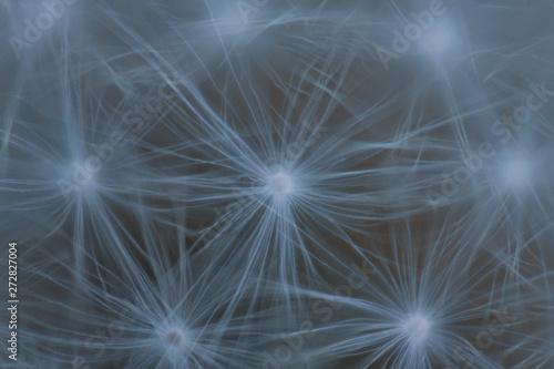 Fototapeta abstract dandelion background obraz na płótnie