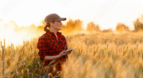 Fototapeta A woman farmer examines the field of cereals and sends data to the cloud from the tablet. Smart farming and digital agriculture. obraz