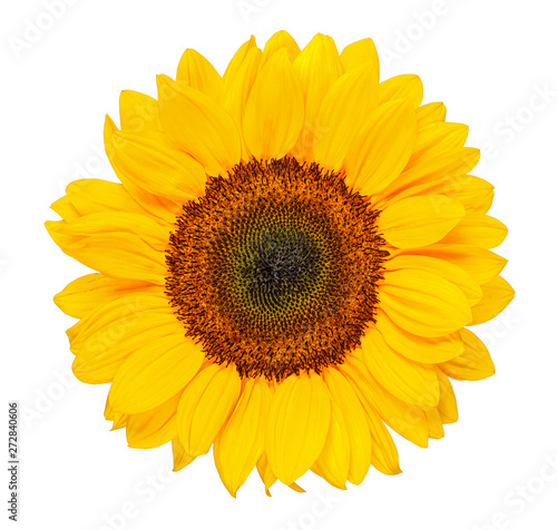 Foto sunflower isolated