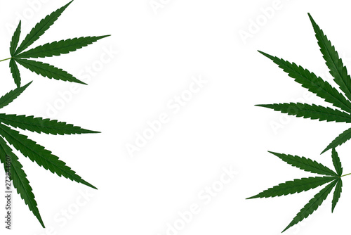 Fotografija  marijuana or cannabis on white background isolate,copy space for text