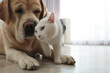 Adorable dog and cat together on floor indoors, closeup with space for text. Friends forever