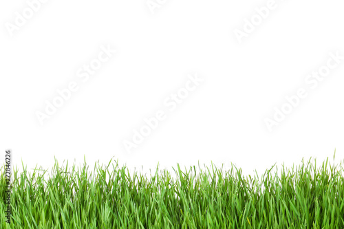 Photo  Beautiful vibrant green grass on white background