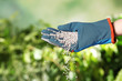 Leinwandbild Motiv Woman in glove pouring fertilizer on blurred background, closeup with space for text. Gardening time