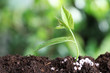 Fresh growing plant and fertilizer on soil against blurred background, space for text. Gardening time