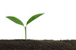 Leinwanddruck Bild - Young plant in fertile soil on white background, space for text. Gardening time