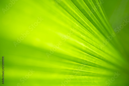 Foto auf AluDibond Lime grun Closeup nature view of green leaf and blurred greenery background in garden with copy space for text using as background natural green plants landscape, ecology, fresh wallpaper concept