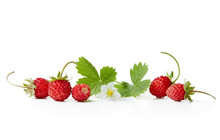 Fresh Wild Strawberries With Flowers And Leaves On White Background.