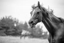 HORSE IN MONOCHROME
