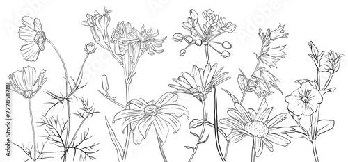 Fototapeta vector drawing flowers obraz na płótnie