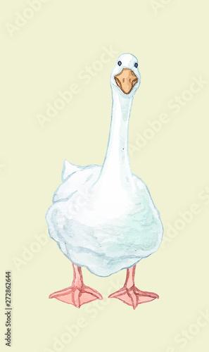 Fotografia, Obraz Goose duckling duck Drake paw beak white red birds