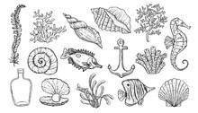Sea Shell, Seaweed, Anchor, Se...