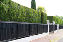 Green Hedge Metal Fence Of Res...