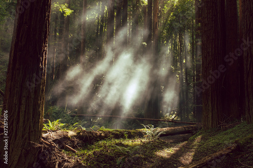 Poster de jardin Route dans la forêt Fog and light rays in the redwood forests of Northern California