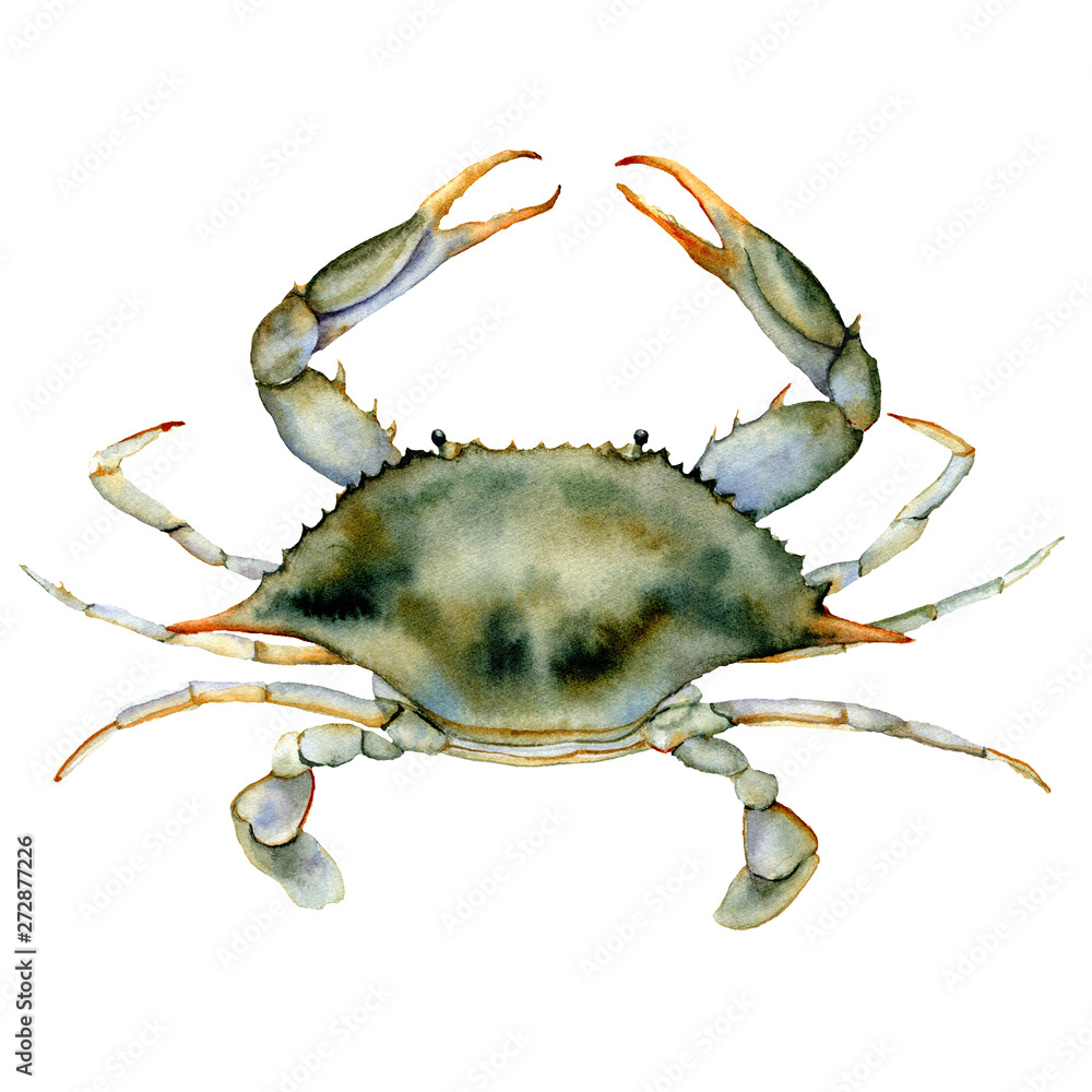Watercolor Blue crab. Underwater animal illustration isolated on white background. For design, prints or background. <span>plik: #272877226 | autor: yuliya_derbisheva</span>
