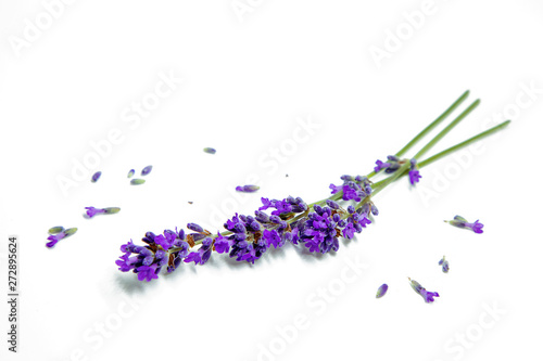 Papiers peints Lavande Flowers of lavander, background with flowers