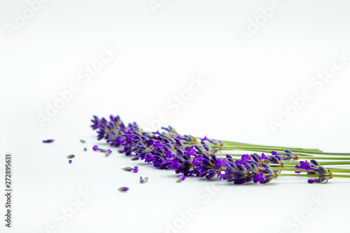 La pose en embrasure Lavande Flowers of Lavander; background with flowers