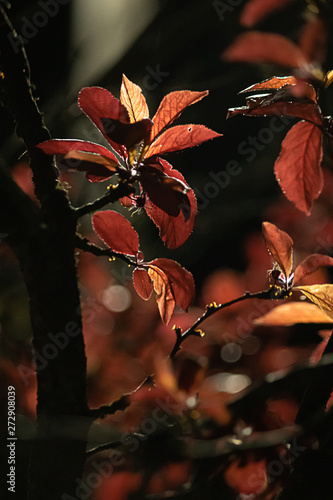 bright tall red and orange new leaves on tree branches in spring evening
