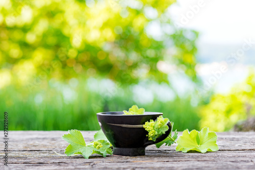Cup of hot tea from the leaves of fresh alchemilla served on a rustic wooden board against a summery backdrop