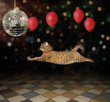 The Cat Is Flying With The Help Of Red Balloons Near The Mirror Ball In The Circus.