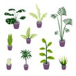 Set of isometric potted plants illustrations for indoor design illustrations