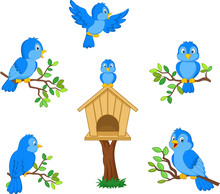 Set Of Cartoon Blue Bird On Wh...