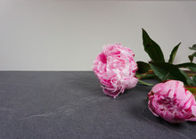 Two Beautiful Pink Peony Flowe...