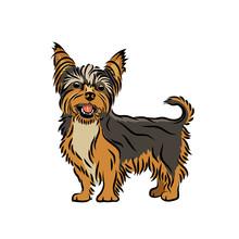 Yorkshire Terrier Dog - Isolat...