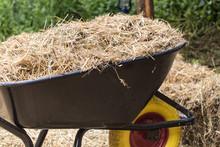 Wheelbarrow With Freash Hay To Feed Horses