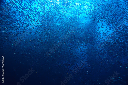 Poster Peche scad jamb under water / sea ecosystem, large school of fish on a blue background, abstract fish alive