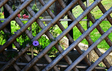 Wooden Lattice Fence With Morn...