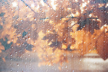 Background Wet Glass Drops Autumn In The Park / View Of The Landscape In The Autumn Park From A Wet Window, The Concept Of Rainy Weather On An Autumn Day