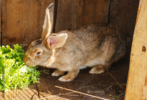 young rabbit in a cage on private farm Fototapet