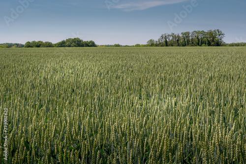 The fields of Auvers-sur-Oise, France Canvas Print
