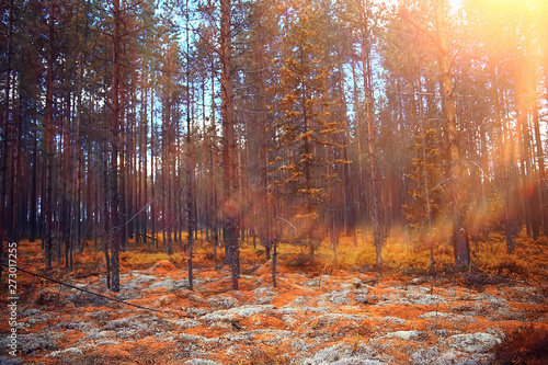 Fotobehang Natuur autumn forest landscape / yellow forest, trees and leaves October landscape in the park