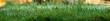 Ein Streifen mit Grashalmen an denen Wassertropfen perlen