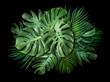 Leinwandbild Motiv Tropical leaves on black background with copy space Summer banner design