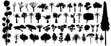 Tree Silhouette Black Vector. Isolated Set Forest Plants Bushes On White Background