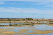 Bird Sanctuary On Island Ile De Re