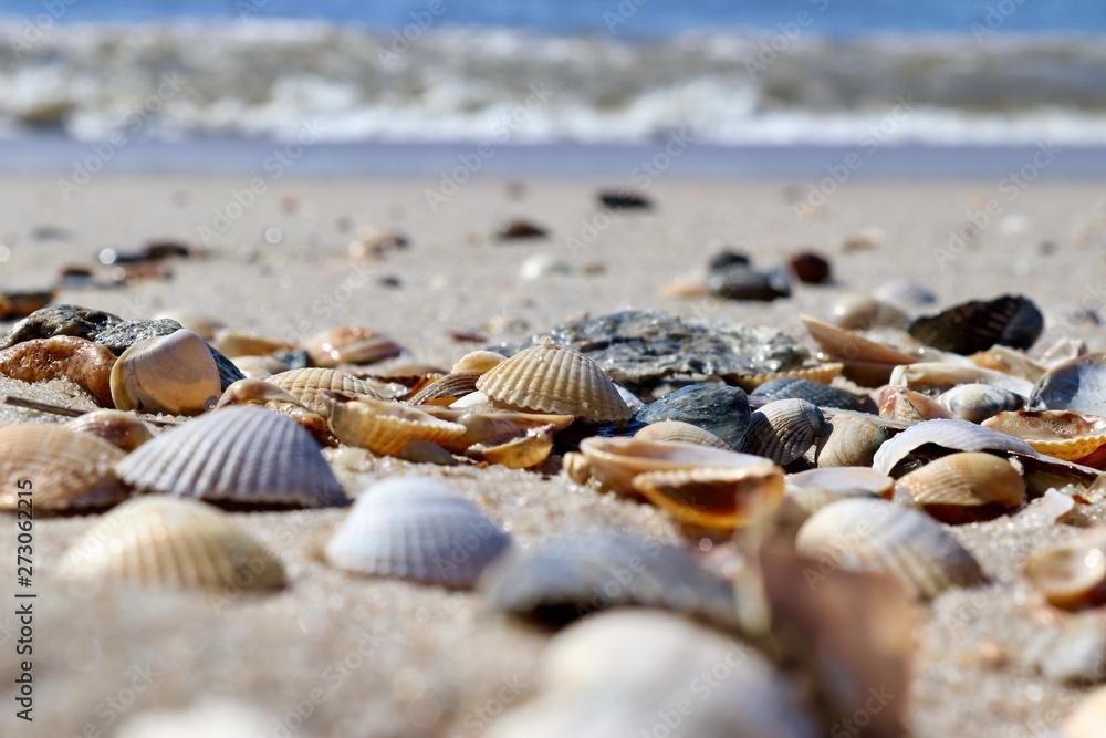 Fototapety, obrazy: shells on the beach