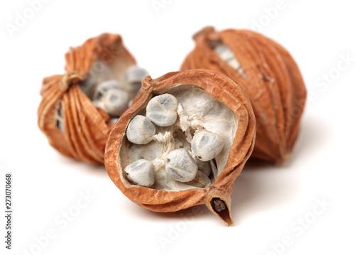 Dried Herbs, Latin name: Amomum villosum Lour Billede på lærred