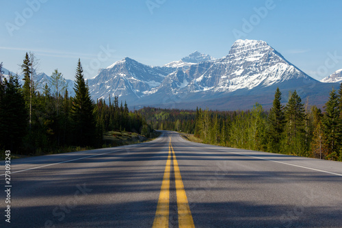 Poster Blanc Morning road lined with trees leading to high mountains
