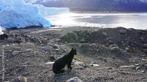 Photo 黒猫と氷河 black cat and glacier