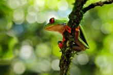 Beautiful Amphibian In The Nig...