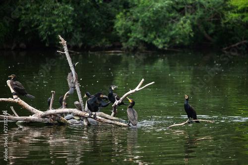 Fotobehang Vissen a large flock of birds sits on logs near the water
