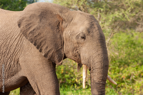 Photo elephant mammals of the national park reserves and parks of south africa