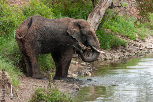 elephant mammals of the national park reserves and parks of south africa Wallpaper Mural