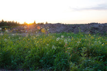 Close-up Of Meadow Grasses And Flowers At Sunset