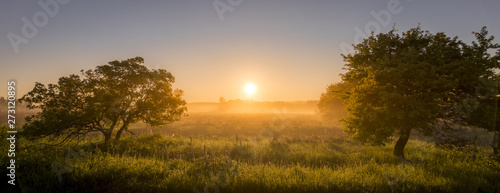 Poster Gris Sunrise on a field covered with flowering lupines in summer morning with fog. Panorama.