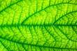 Leinwandbild Motiv Lines and patterns of green leaves
