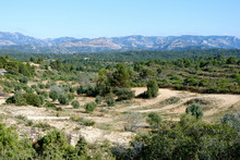 Olive And Almond Gardens In Th...